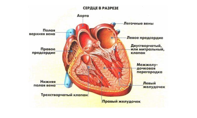 chto-takoe-diffuznye-izmeneniya-miokarda