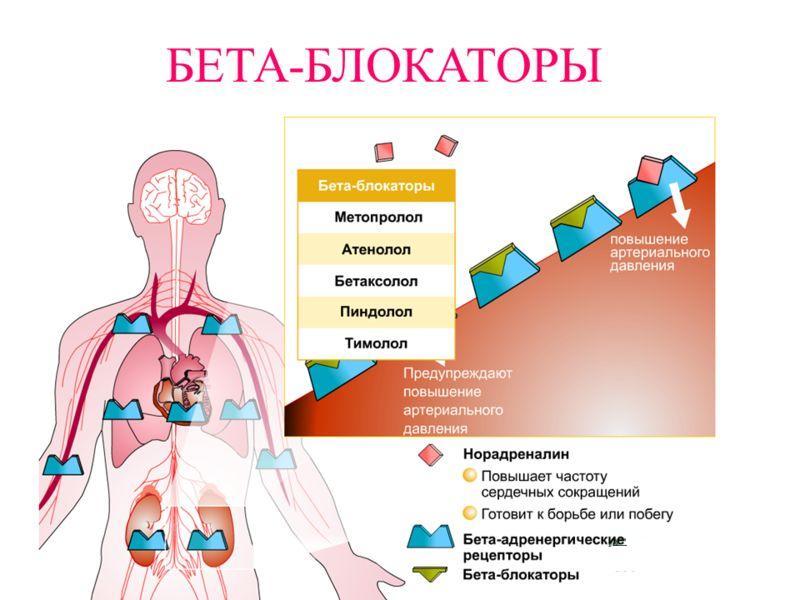 Для снижения нагрузки на сердце и блокирования симпатических влияний на сердечную мышцу применяются препараты из группы бета-адерноблокаторов
