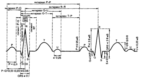 Основные показатели кардиограммы работы сердца