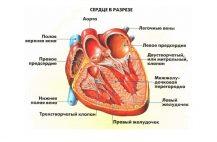 diffuznye-izmeneniya-miokarda